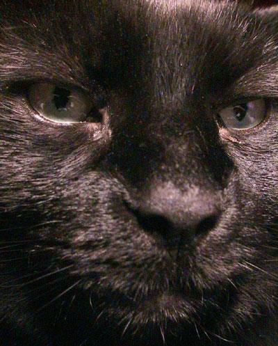 Jessica the cat